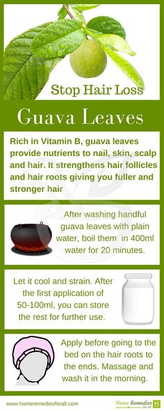 Guava leaves are very effective home remedy to stop hair loss and to regrow lost., Guava leaves are very effective home remedy to stop hair loss and to regrow lost hair. Normal Hair Loss, Hair Loss Cure, Oil For Hair Loss, Stop Hair Loss, Hair Loss Remedies, Prevent Hair Loss, Guava Leaves For Hair, Hair Fall Remedy, Natural Hair Loss Treatment
