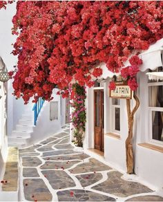 No place like #Greece ... see you soon 🇬🇷 via @earthpix #travelGreece #mykonos #photography #design #artsy #romantic #decor #architecture #view #travelblogger #travels #travelguide #hotelinterior #traveler #traveling #traveltheworld #travelholic #traveleurope #wanderlust #travel #bucketlist #architecturelovers #europe #wanderlust #traveladdict #hoteldesign #inspiration #inspo #travelblog #travelgram