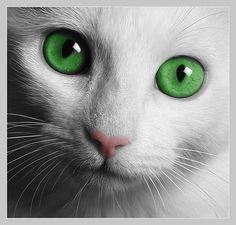 Lysandro [Weil er mich an eine Katze erinnert...]