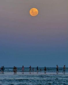 Lua Cheia - Florianópolis - SC/ Brasil - Foto: Natacha Costa