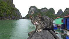 動物写真家・岩合光昭が世界各地で撮影するネコ、冒頭は「おなかペロペロ」。「猫識」は「バリバリ爪とぎ」。名場面はベトナム・水上の子ネコとイギリス・ピアノのそばで。