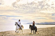 Horses, Trail Rides, Los Cabos : Cabo San Lucas and San Jose del Cabo