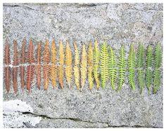 bracken rainbow
