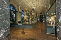 ERCO - Scoprire la luce - Culture - Museo di Storia Naturale Vienna, Sala dei dinosauri