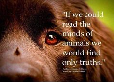"""""""If we could read the minds of animals, we would find only truths."""" - Anthony Douglas Williams"""