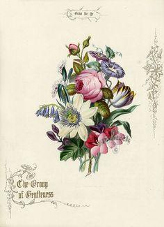Antique Botanical Print                                                                                                                                                     Plus