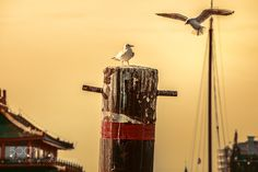 Seagulls by Luciano_Neves