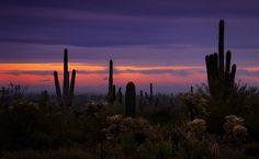 Pink Sunrise - Saija Lehtonen, photographer from Chandler, AZ (Arizona sunrises)