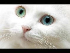 I always wanted two different colored eyes. And a white cat with two different colored eyes.