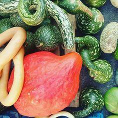 Welchen nehmen wir mit?  #kürbis #pumpkins #blog Blog, Blogging