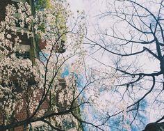 Weekend Snapshot: Spring Things