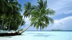 Palm over the shallow ocean wallpaper