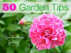 """Welcome to """"All Things Creative""""   50 Garden Tips (You Should Pin For Later) 9 of us bloggers have joined together to bring you 50 Garden Tips. I've highlighted some of mine first, and then you'll find all 50 below. Just click, and I'll take you there! First up, is our Michigan """"Garden Tour on …"""