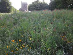 Bristol castle park ecology - Google Search