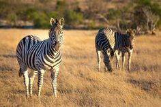 Join us for a game drive through the Villiera Wildlife Sanctuary. #Villiera #BubblySafari