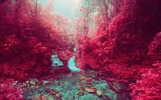 Photographer creates eerie landscapes with discontinued Kodak infrared film - Telegraph