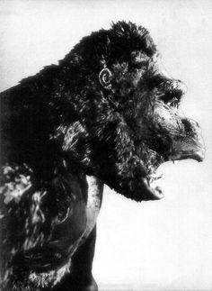 gameraboy:  King Kong model, 1933. Photo by model maker Marcel Delgodo.