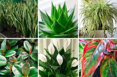 """Clean the Air With These Oxygen Producing Plants Homesteading  - The Homestead Survival .Com     """"Please Share This Pin"""""""