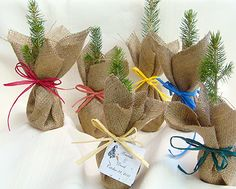 """Seedlings in burlap as wedding favors for nature-themed wedding. """"Plant a memory of our day"""""""