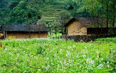 Der Echte Buchweizen Garten bevor der Blumensaison - #AsiaticaReisen
