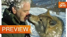 Gordon Buchanan comes face to face with a wolf - Life in the Snow