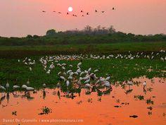 pantanal | : Pantanal (Sul) | Mato Grosso do Sul – Brasil | Bonito Pantanal ...