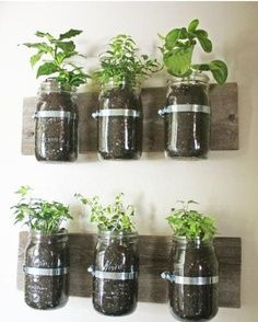 Mason Jar Wall Planter {mason jar} ~ Learn how to create an adorable indoor or outdoor wall planter. These jars would look so cute on a kitchen wall filled with herbs! You can make your own wall planter by using mason jars, an old board, and pipe clamps.