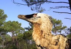 Velociraptor mongoliensis by Alain Beneteau