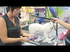 Pinned from Groomer TV. How to do a Pet Trim.