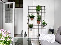 Idé för krukväxter inomhus. Armeringsnät