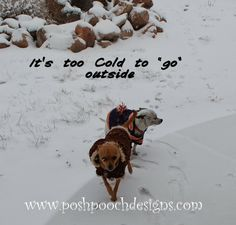 Posh Pooch Designs Dog Clothes: BBBRRRRrrrrr.... It is so cold!