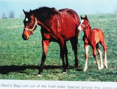 Special. This aptly named mare was very special indeed. Special is by Forli - Thong by Nantallah, and descends from the exceptional family of Rough Shod II. Although she only made one non placed start, Special became a broodmare extrordinaire. She is the dam of leading sire Nureyev, and stakes winners and major producers Number, Bound and Fairy Bridge, The latter of which is the dam of the incomparable Sadler's Wells.