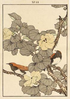 IMAO Keinen(今尾 景年 Japanese, 1845-1924)Little Leaf Linden Hibiscus, Temminck's Robin 1891 Color woodblock via