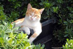 Chasser les chats du jardin - jardinier paresseux