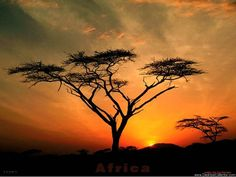 african tree at sunset Sunset Wallpaper, Nature Wallpaper, Hd Wallpaper, Landscape Wallpaper, Desktop Wallpapers, Logo Fleur, African Tree, African Sunset, South Africa