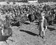Cuteness alert: Baby standing with turkeys, circa 1945 by OSU Special Collections & Archives, via Flickr