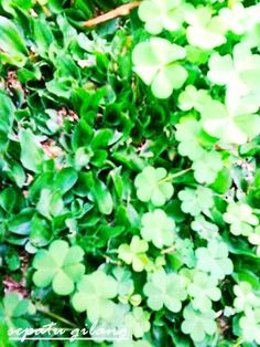 find your lucky clover :*