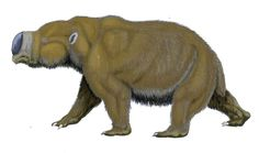 Diprotodon optatum  These creatures, the largest marsupials that ever lived, roamed Australia. Some scientists have suggested that stories of the supernatural 'bunyip' creature in Aboriginal folklore could be based on diprotodonts.