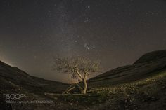 The tree sitting by ManuelGuillenAbad. Please Like http://fb.me/go4photos and Follow @go4fotos Thank You. :-)