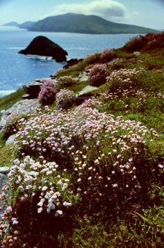 Dingle Peninsula (Corca Dhuibhne), Co. Moving To Ireland, Ireland Travel, Irish Boys, Scenic Photography, Emerald Isle, Northern Ireland, Homeland, Beautiful Landscapes, Wonders Of The World