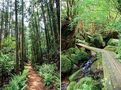 The trail to Yoggogawa, Yakushima, Japan