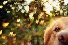Портреты собак Джессики Тринх