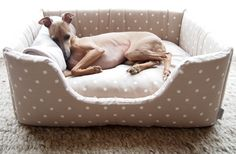 check out some cute dog beds http://modernhomedesign.org/dogbed