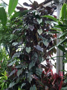 House Plants Decor, Plant Decor, Leafy Plants, Indoor Plants, Architectural Plants, Sensitive Plant, Money Trees, Calathea, Ornamental Plants
