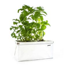Patch self-watering planter