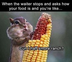 Laugh Out Loud With These Funny Squirrel Memes