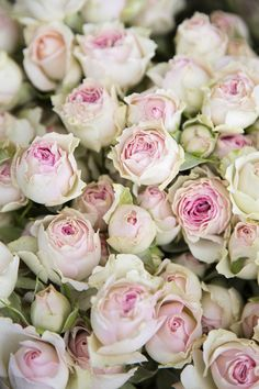 Beautiful Rose Flowers, Beautiful Flowers, Rose Flower Wallpaper, Bouqets, Apothecaries, Floral Photography, Spray Roses, Flower Market, English Roses