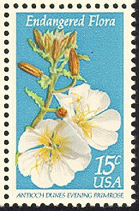 The Antioch Dunes evening primrose represents one of about 1,700 seriously threatened plant species in the United States.  1979-06-07