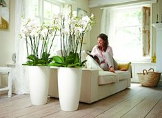zimowym ogrodzie orchids in large white pots . need to have!orchids in large white pots . need to have! Indoor Garden, Indoor Plants, Diy Garden, Garden Ideas, Orchid Pot, Orchid Arrangements, Deco Floral, Interior Plants, Interior Design