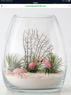 Succulents ideas: Two flamingos with air plants or succulents in a belly vase terrarium Mini Terrarium, Air Plant Terrarium, Terrarium Ideas, Terrarium Decorations, Terrarium Scene, Seashell Crafts, Beach Crafts, Air Plants, Indoor Plants